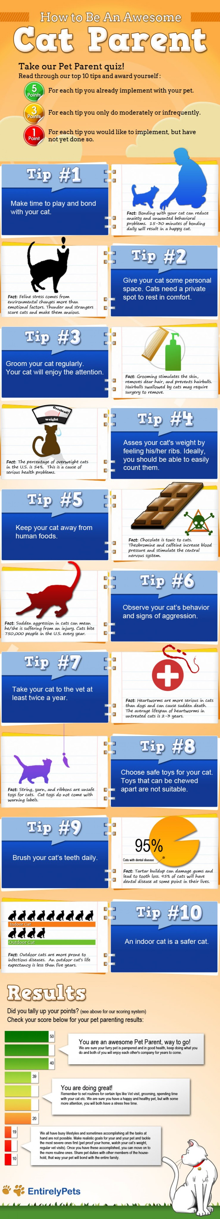 how-to-be-an-awesome-cat-parent_52e06be561e55_w1500